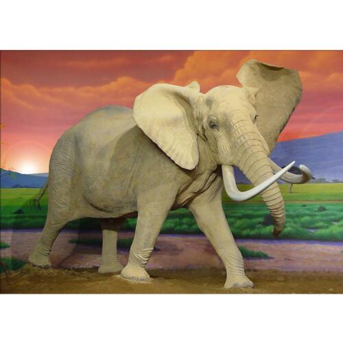 5D DIY Full Drill Diamond Painting Magic Elephant Cross Stitch Mosaic Art Craft