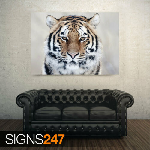 Picture Poster Print Art A0 A1 A2 A3 A4 3471 TIGER CLOSE UP Animal Poster