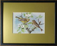 Basil Ede, 20''x16'' frame, Bird framed wall art, Green Finch print, garden bird