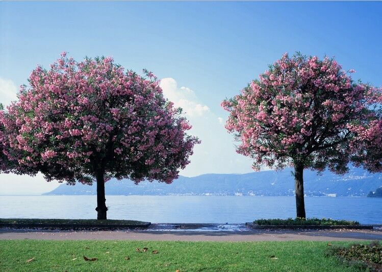 3D Blühende bäume Strand 9 Fototapeten Wandbild Fototapete BildTapete Familie DE