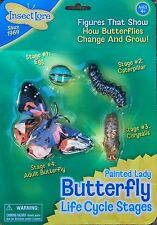 BUTTERFLY life cycle 4 stages - Outdoor learning Insect Lore plastic resource