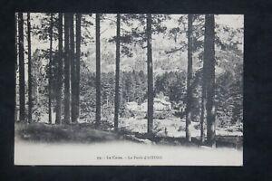 Postcard-Antique-1930-La-Corsica-La-Forest-of-Aitone