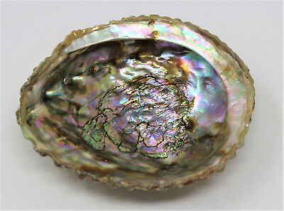 """FREE SHIPPING 5/"""" to 6/"""" Abalone sea shell Sage Smudge Incense resin GREAT COLOR"""