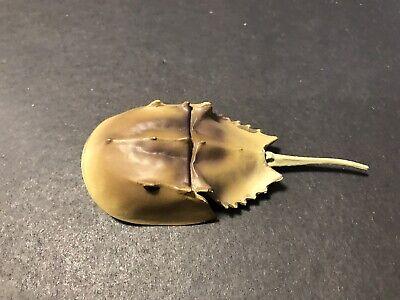 RARE Toba Aquarium Horseshoe Crab Mini Figure Nice!