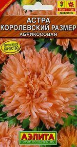"""Aster """"king Size"""" Apricot. Russian High Quality Vente Chaude 50-70% De RéDuction"""