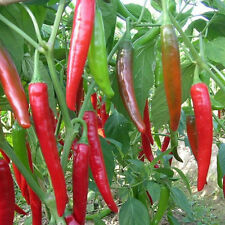 10Pcs/set Home Garden Giant Spices Red Spicy Chili Pepper Seeds Vegetable Plant