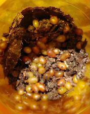 50 - Red Wiggler & Euro Nightcrawler Cocoons = 14,000 adult worms in 60 weeks.