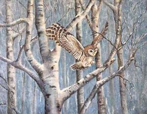 Snowy-Owl-039-Winter-Wings-039-20x24-oil-on-canvas-By-Alice-Hurlbert-Oklahoma-Artist