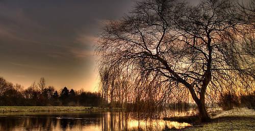 "PHOTOGRAPHY LANDSCAPE CANVAS ART TREE BY LAKE 40/""x20/"" L"