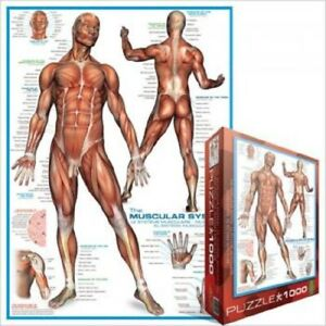 EG60002015 Eurographics Puzzle 1000 Piece Jigsaw - The Muscular System