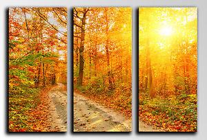 Cuadro-Moderno-Fotografico-base-madera-87-x-62-cm-Bosque-Otono-Atardecer-Sol