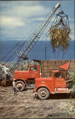 Hawaii HI Sugar Cane Harvest 1950s Trucks Postcard
