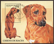 RHODESIAN RIDGEBACK Dog Postage Stamp Souvenir Mini Sheet BENIN - 1997 Used