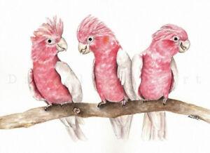 Watercolour Galah Print Australian bird art bird prints nursery artwork pink