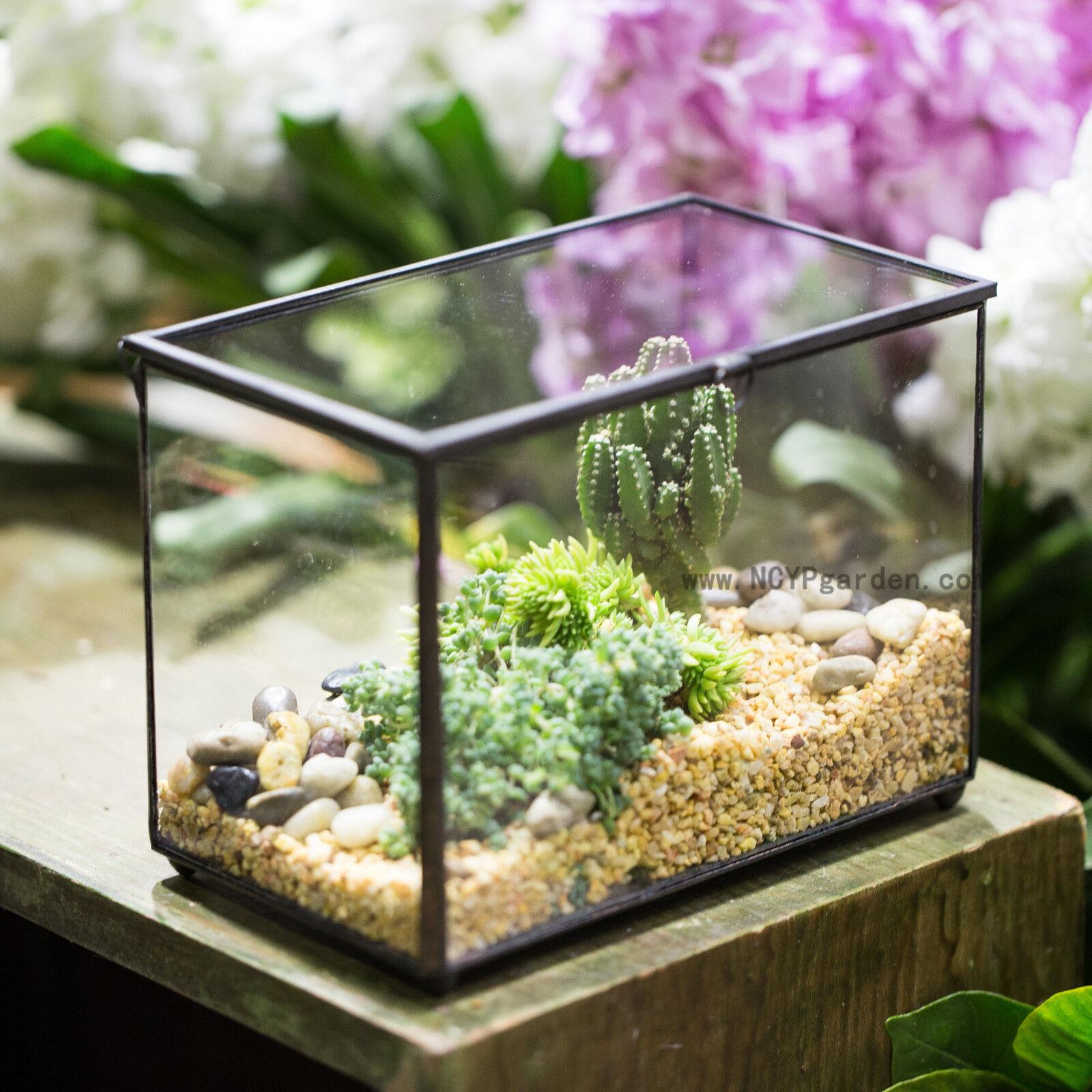 Footed Rectangle Clear Glass Geometric Terrarium Box Succulent Cacti Planter Diy For Sale Online