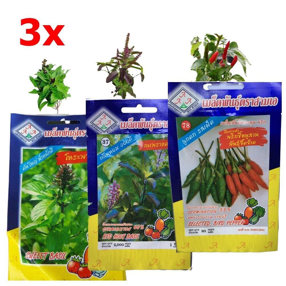 3x Seeds Red Holy Basil Sweet Basil Bird's Eye Chilli Plant Vegetable Food Thai