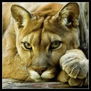Female Lion - DIY Chart Counted Cross Stitch Patterns Needlework 14 ct Aida