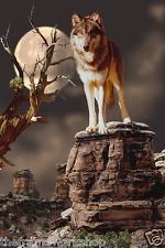 Wolf MOONLIGHTER - 3D Lenticular imagen en movimiento 300mm X 400mm (nuevo)