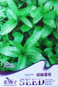 Original-Packaging-50-Seeds-Peppermint-Seed-Hybrid-MINT-Aromatic-Herb-Plant-D032