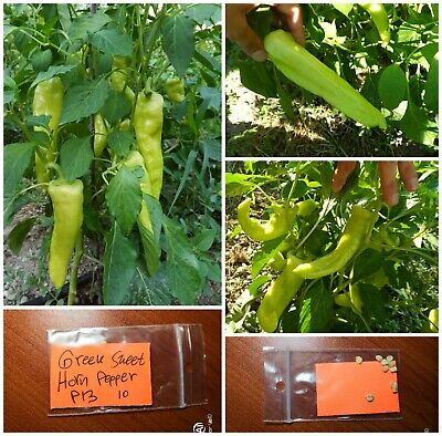Traditional Greek Sweet Horn Pepper /'/'P13/'/' ~10 Top Quality Seeds EXTRA RARE