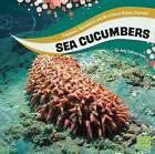 Sea Cucumbers by Jody Sullivan Rake (Hardback, 2016)