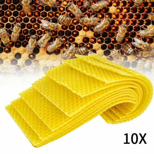 10 PCS Beeswax Beekeeping Honeycomb Wax Frames and Foundation Waxing Bee Hive
