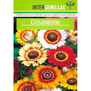 Chrysantheme-Sonnenblume-Afrika-Saatgut-350-Ca-Chrysantemum-Carinatum