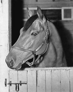 Champion-Racehorse-SEABISCUIT-Glossy-8x10-Photo-Thoroughbred-Print-Poster
