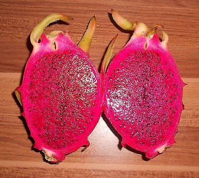 Pitahaya Rote Drachenfrucht 50 Samen *Rotfleischig* ---Selten---