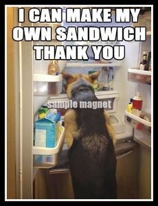 "Funny German Shepherd Refrigerator Magnet 4"" x 3"""