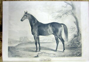 3-1840-Sport-newspapers-w-LARGE-blank-back-ENGRAVINGS-o-THOROUGHBRED-RACE-HORSES