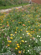 1 kg niedrige Blumenwiese 1001 Nacht Blumenzauber Bienen Insekten Blumenmischung