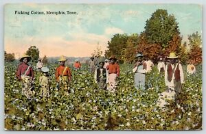 Memphis-Tennessee-Black-Americana-Workers-Picking-Cotton-Families-in-Field-1913