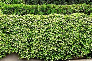 Plants Living Fence Pot Patio Cover