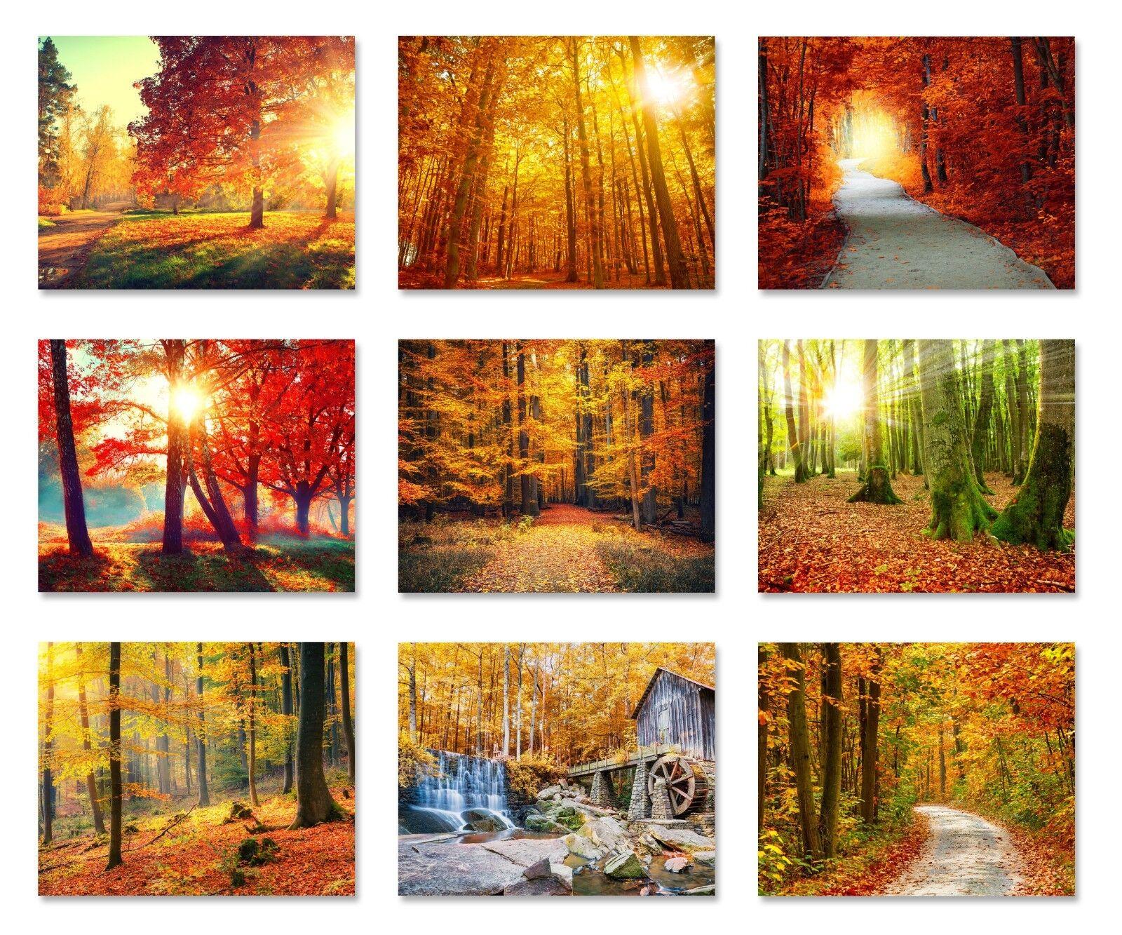 Herbst Wald Tapete Wälder Wald Sonnenaufgang Sonnenuntergang Wandbild Foto