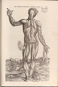8 Rare Antique Anatomy Books Andreas Vesalius on one DVD | eBay