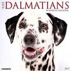 Just Dalmatians by Willow Creek Press 9781682340806 Calendar 2016