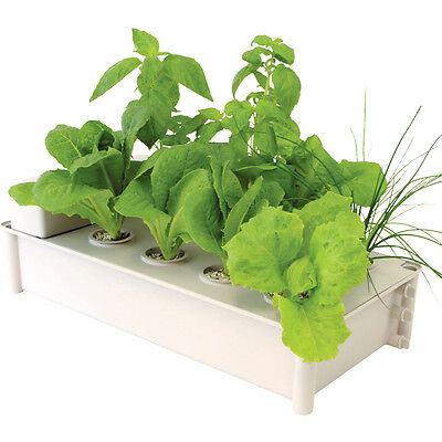 GP0300 - Hydroponic Salad Green Grower (Moss Products)