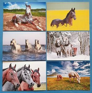Quality-Set-of-6-Brand-New-Glossy-Postcards-HORSES-Horse-64O