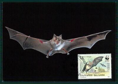 Bulgarien Mk Fauna Fledermaus Bat Chauve-souris Maximumkarte Maxi Card Mc Eg56