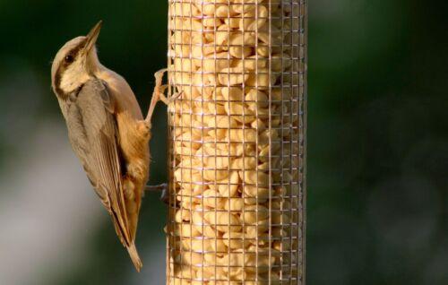 Metall-Futtersäule für Nüsse Futterspender mit Edelstahlgitter zum Aufhängen