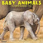 Baby Animals 9781682340158 Willow Creek Press Calendar Book UK Delivery