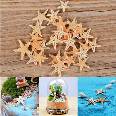 20Pcs New Cute Small Mini Starfish Sea Star Shell Beach Deco Craft DIY Making