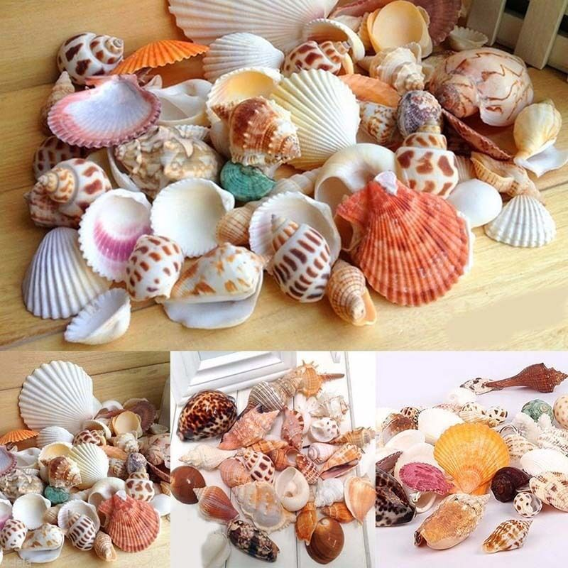 Strand gemischte Muscheln Shell Craft Table Decor Aquarium kleine Medium,
