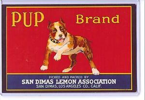 VINTAGE 1940 REPRODUCTION PUP BRAND LEMON FRUIT DOG 1988 REPRO POSTCARD