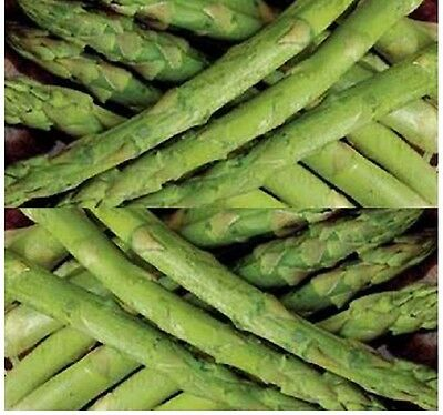 UC 157 F2 Asparagus seeds - GREEN ASPARAGUS ~ Out yield open pollinated types