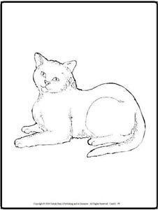 Malbuch 48 Malvorlagen Knuffige Katzen Ausmalbilder Als Pdf Kinder Malen Ebay
