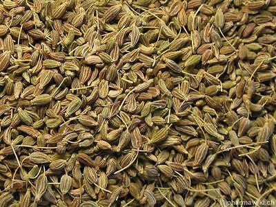 H859 Oysterleaf Seeds Semi Rara 5 Semi di /'Ostrica Vegetale Mertensia Maritima