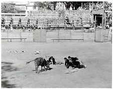 """1940 Vintage Photo bullfighters """"homage"""" to bull at Bullfighting event in France"""