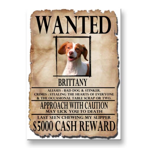 BRITTANY Wanted Poster FRIDGE MAGNET New DOG Funny